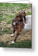 Please Exonerate Me 2 - Billy Goat Greeting Card