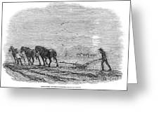 Ploughing, 1846 Greeting Card