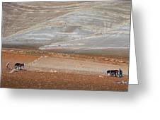Ploughing In The Atlas Mountains Greeting Card