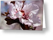 Plum Blossoms 10 Greeting Card