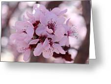 Plum Blossoms 4 Greeting Card