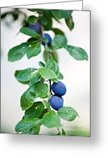Plum Tree Greeting Card