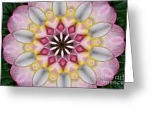 Plumeria 3 Greeting Card
