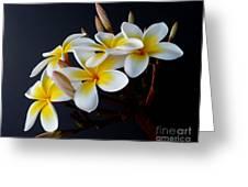 Plumeria Bouquet Greeting Card