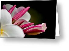 Plumeria In The Wind Greeting Card