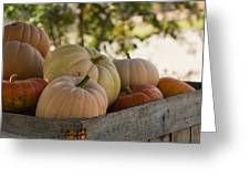 Plump And Purdy Pumpkins Greeting Card