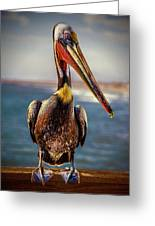 Plump Peter Pelican's Pier Photo Pose Greeting Card