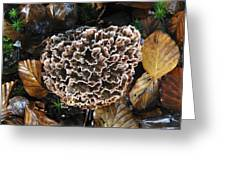 Podoscypha Fungus Greeting Card