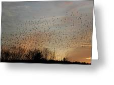 Poetic Swarms Greeting Card