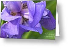 Poetry Of An Iris Greeting Card