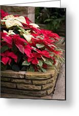 Poinsettia Garden Greeting Card