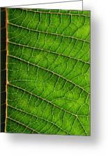 Poinsettia Leaf IIi Greeting Card