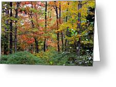 Point Beach State Forest Greeting Card