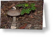 Point Lobos Park  Greeting Card