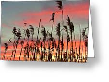 Point Pelee Sunset Greeting Card