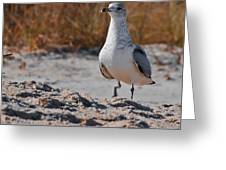 Poised Seagull Greeting Card