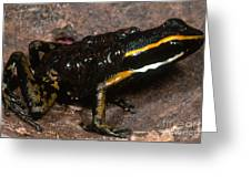 Poison Arrow Frog With Tadpoles Greeting Card