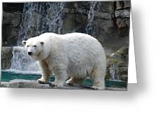 Polar Bear 2 Greeting Card