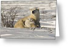 Polar Bear With Cub, Watchee Greeting Card