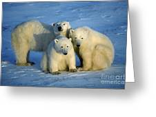 Polar Bear With Cubs Greeting Card