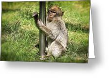 Pole Dancing Macaque Style Greeting Card