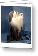 Polish Lowland Sheepdog 243 Greeting Card