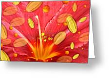 Pollen And Flower Greeting Card