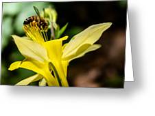 Pollen Ater Greeting Card