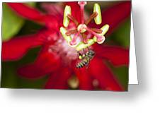 Pollen Collection Service Greeting Card by Zoe Ferrie