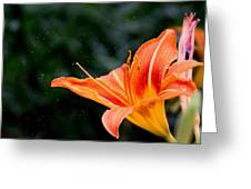 Pollen Flying Greeting Card