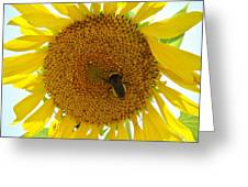 Pollen Hunter Greeting Card