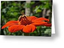 Pollenating Greeting Card