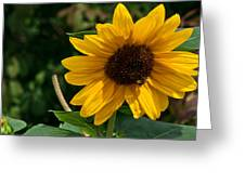 Pollinating In Camouflage Greeting Card