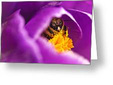 Pollination Party Of One Greeting Card
