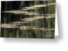 Pond And Grass Abstract Greeting Card