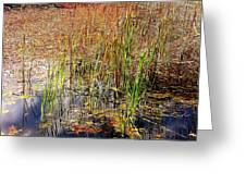 Pond And Rushes Greeting Card