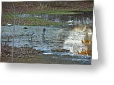 Pond Birds At Sunset Greeting Card