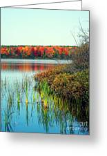 Pond In The Woods In Autumn Greeting Card