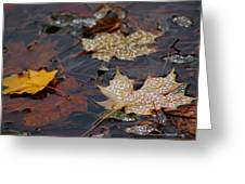 Pond Leaf Dew Drops Greeting Card by LeeAnn McLaneGoetz McLaneGoetzStudioLLCcom