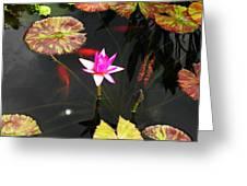 Pond Life  Greeting Card