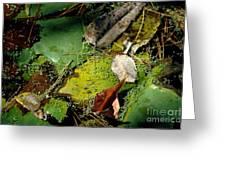 Pond Lumens Greeting Card