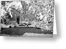 Pond Mystere Greeting Card