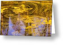 Pond Scum Two Greeting Card