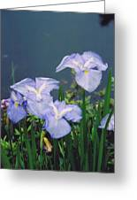 Pond Side Beauty Greeting Card
