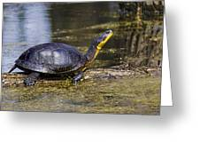 Pond Turtle Basking In The Sun Greeting Card