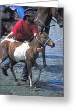 Pony Handler On Assateague Greeting Card