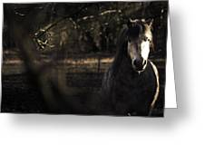 Pony In The Brambles Greeting Card by Justin Albrecht