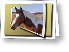 Pony Posing Greeting Card