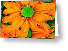 Pop Art Daisies 13 Greeting Card