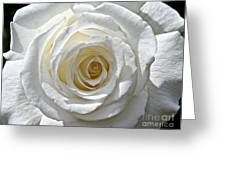 Pope John II Rose Greeting Card